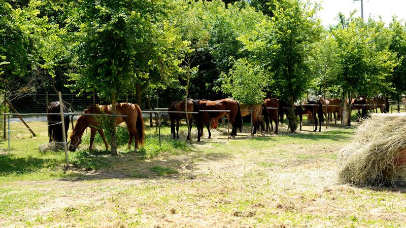 Agricampeggio lago le tamerici per camper caravan e tenda for Cavalli bolzano