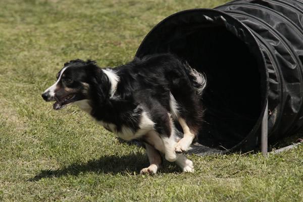 addestramento cani da tartufo perugia italy - photo#45